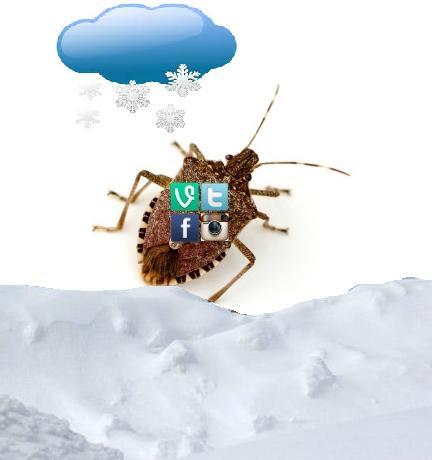 soc med wx bug